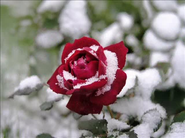 зимовка цветов.