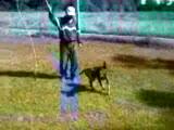 Av Köpeği İtaat Eğitimi Başlangıç
