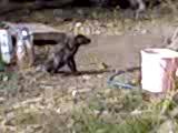 Av Köpeği İtaat Eğitimi