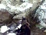 Kastamonu Domuz Avı
